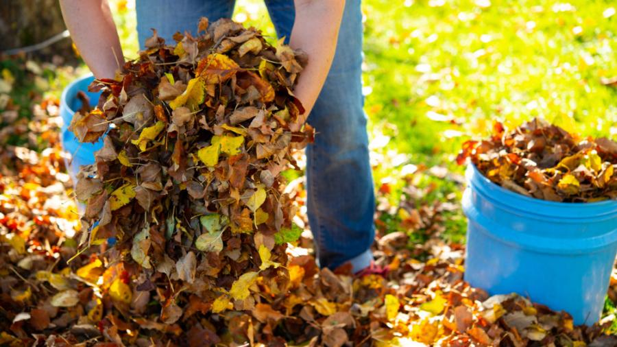 Tartsuk tisztán a lakókörnyezetünket – vegyük igénybe a házhoz menő zöldhulladék-gyűjtést!