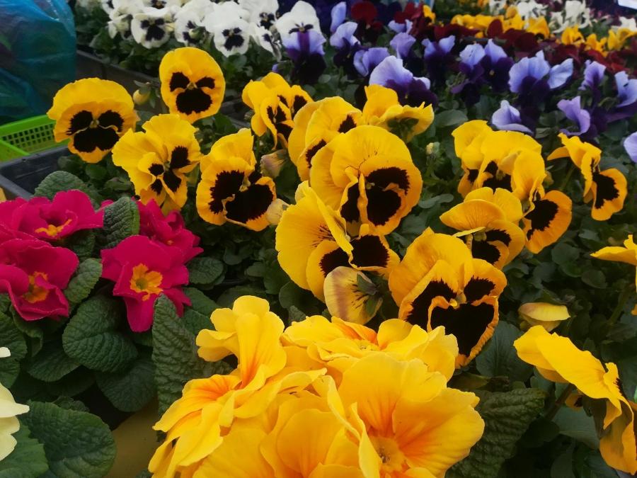 Húsvéti bevásárlás a veszprémi piacon