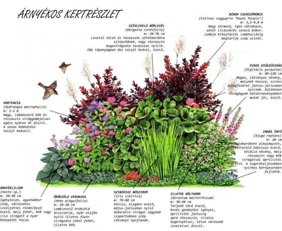 Kertészkedjünk együtt!
