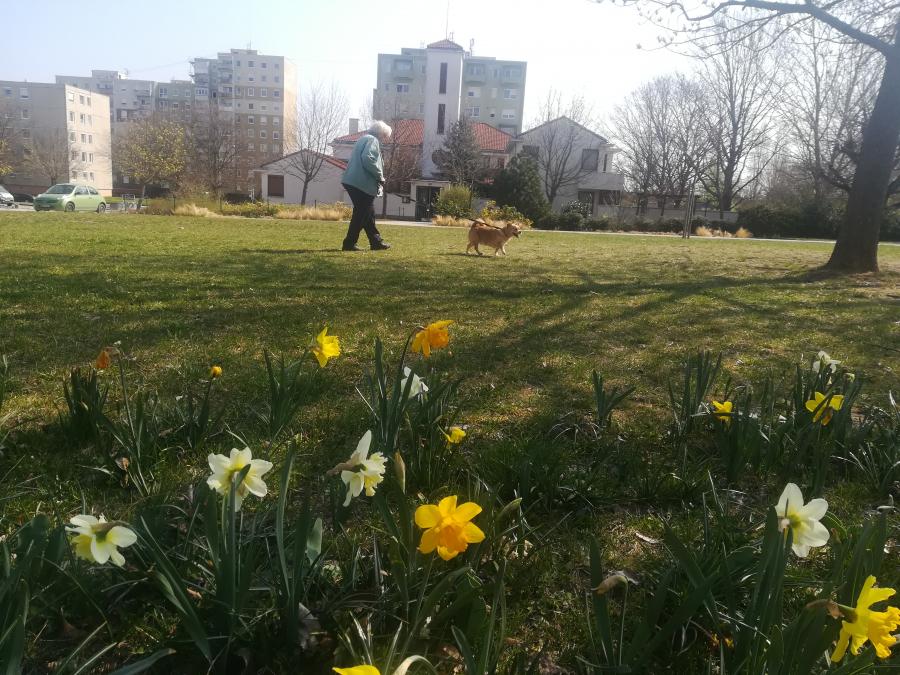 Tudományos alapokon a városi parkgondozás