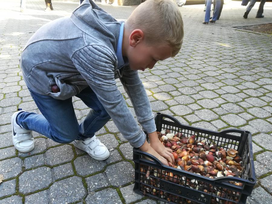 Tulipánhagyma minden iskola és óvoda kertjébe!
