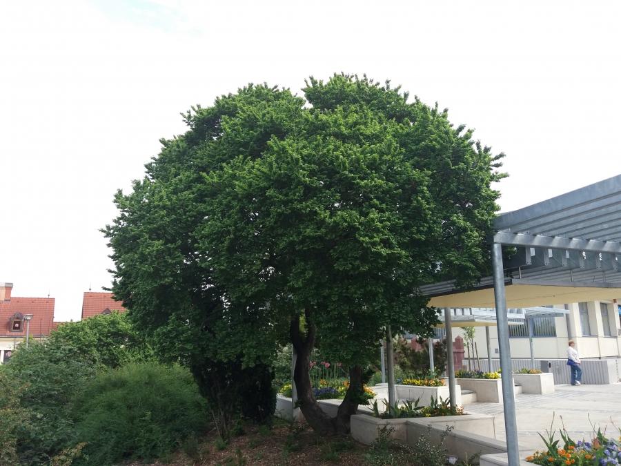Kincseket érő fák Veszprémben!