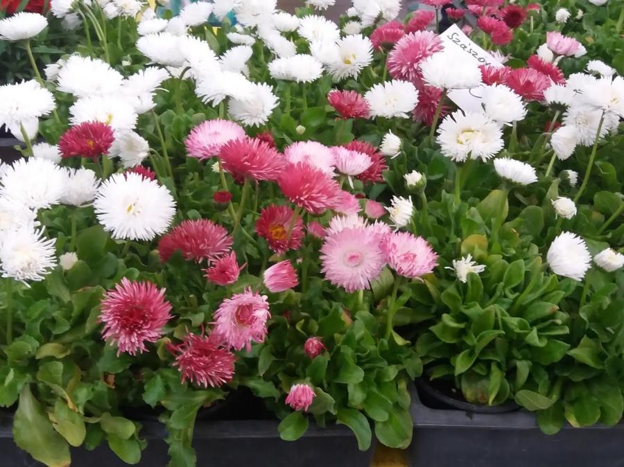Virágtenger a piacon