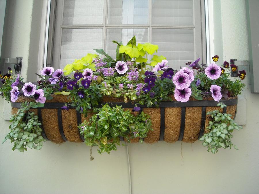 A dúsvirágú balkon 7 titka