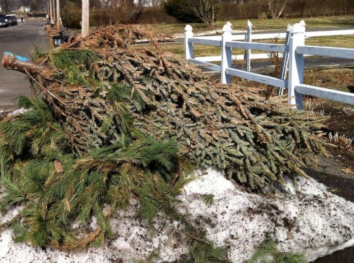 Karácsonyfából komposzt